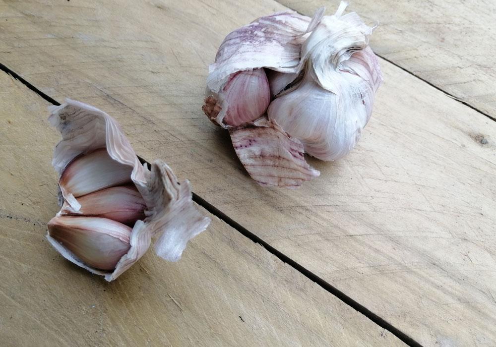 Garlic and its Medicinal Properties